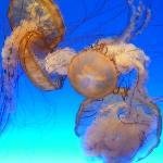 这是展开的水母!