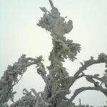 天湖山雪景5