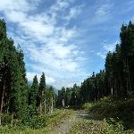 崇州鸡冠山风景26