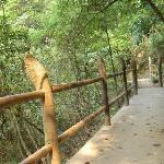 Mt. Yashan Forest Park