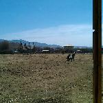 草地上的草还没有绿,可是在玛吉家12亩的大院子里和雪橇玩乐,还是很不错的体验。城里的客栈,哪有这样的院子,呵呵