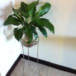房间内的绿植