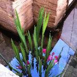 院子里的水中落花