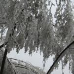 冬天去的,很难得遇到了,是08年1、2月份