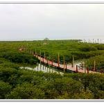 Shankou Mangrove Ecological National Nature Reserve