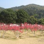森林公园桃花林
