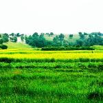 木兰围场草地