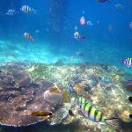 酒店浮潜可见热带鱼和珊瑚