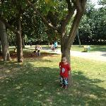 南湖公园的绿树草坪