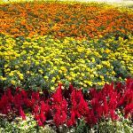铺满了花的草坪