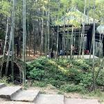竹林之中的竹亭,小憩,悠然。