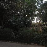 傍晚的金牛山公园