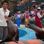 发现王国的海狮表演