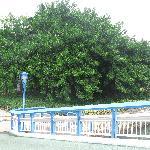 我拍的是这可很大体量的树,请细看。