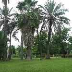 公园内的草坪