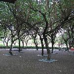 公园内各种树木,这一片躲阴凉是极好的!