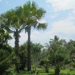 中科院植物园