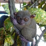 超cute的眼镜猴