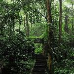 歌乐山林园