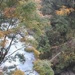 Laba River Forest Park