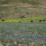 Bangjietang Grassland