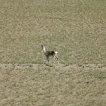 Nakqu Arctic-alpine Grassland
