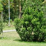 兴隆植物园