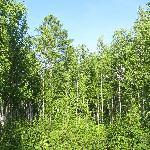 北极村森林公园