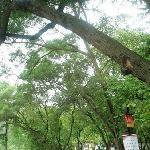 景区门口的绿树