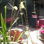 锦庐院内植物