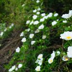 山上的野花