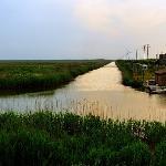 崇明东滩自然保护区