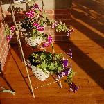 庭院的花儿