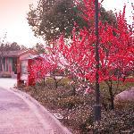 Foto de Fragrant Hotspring Spa Resort