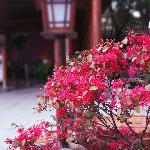 Photo of Fragrant Hotspring Spa Resort