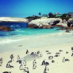 海滩上的企鹅
