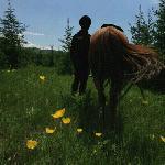 Bashang Hongshanjun Horse track Foto
