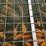 万平口广场的鱼