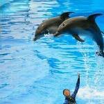 漂亮的海豚