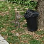 屋前的猴哥沦落到扒垃圾桶的地步了