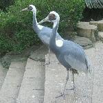 Hefei Wild-life Zoo
