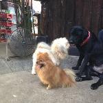 GAP'S dogs