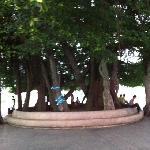 广场的标志性大树