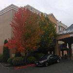 酒店外面的大树很茂盛啊