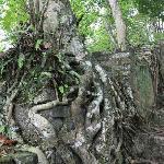 友谊关景区山上的树