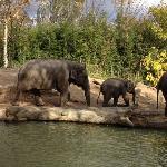 公园里的大象,,