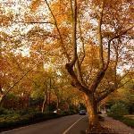 杭州市区秋景