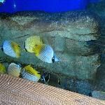 海底世界的鱼类