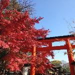 神社侧门的红叶正红