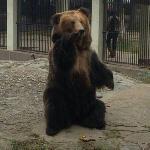 第一次看到黑熊,突然想到熊出没!
